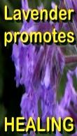 Ormus Minerals - Pure Organic LAVENDER Essential Oil
