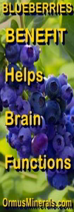 Ormus Minerals - Ormus Brain Balance ingredient blueberries