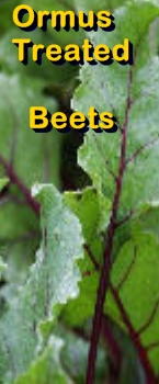 Ormus Minerals Ormus treated beets