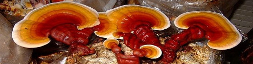 Ormus Minerals REISHI MUSHROOMS